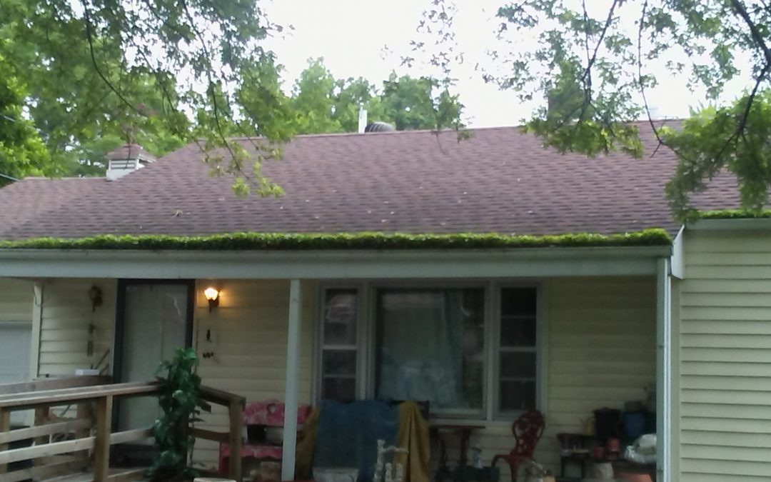 Gutter inspecting and cleaning.